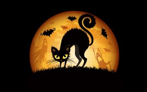 Beware of black cats this Halloween.