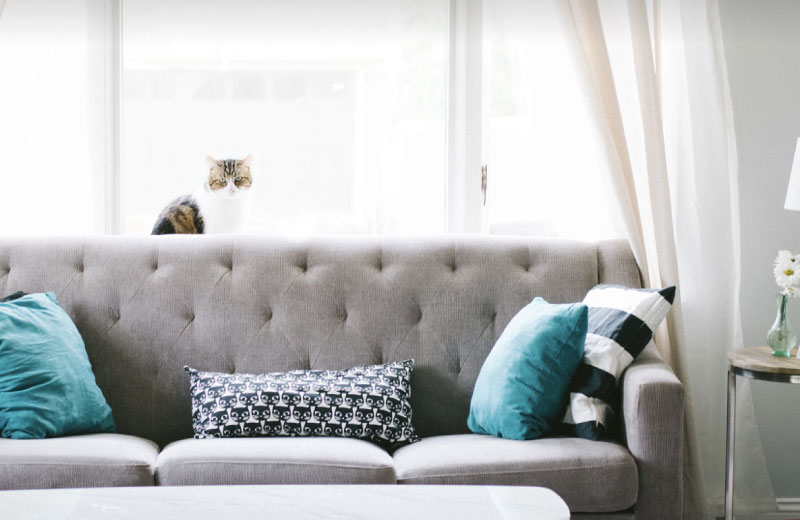 cat sitting on top of a grey sofa